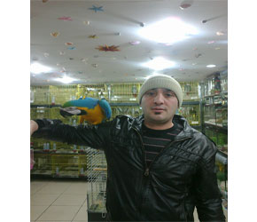 Sarı Lacivert Ara Papağanı
